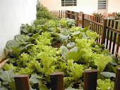 Saúde: Faça horta em casa