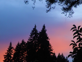 Bright sunset behind conifers