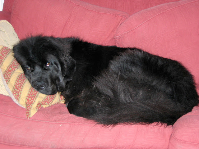 All cuddled up on the ugly couch -- The Impatient Gardener