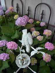 Cottage Hydrangea