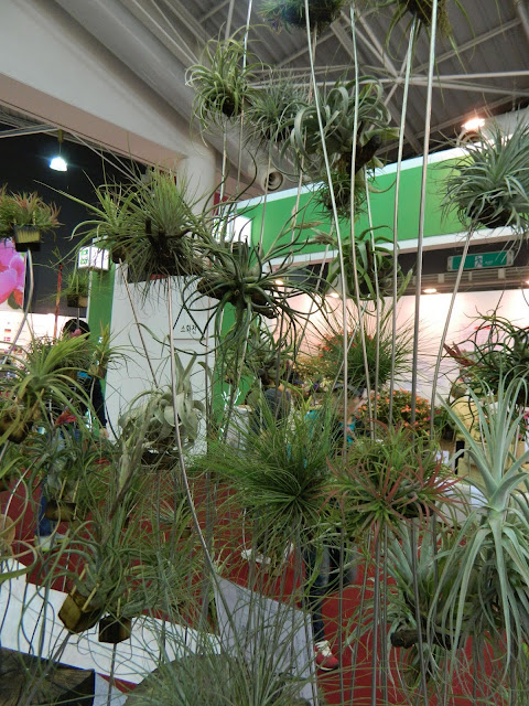 More displays of the airplants