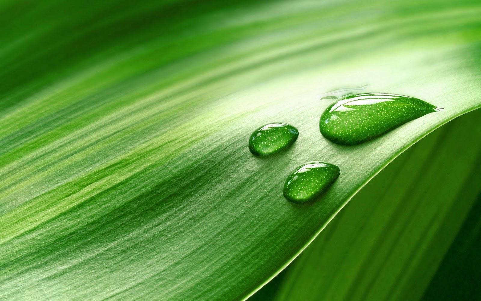Groene achtergrond van een blad bureaublad achtergronden - Wallpaper amandelgroene ...