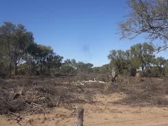 Deforestación en Córdoba