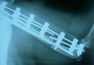 imagen radiologica fijador kirschner en perro