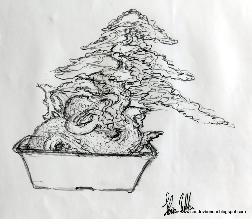SandevBonsai January 2012