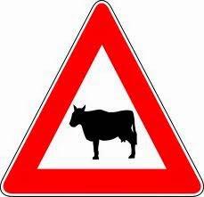 Perigo aqui há vacas / Danger here are cows