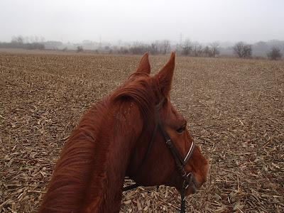 konie, jazda konna, jazda w terenie
