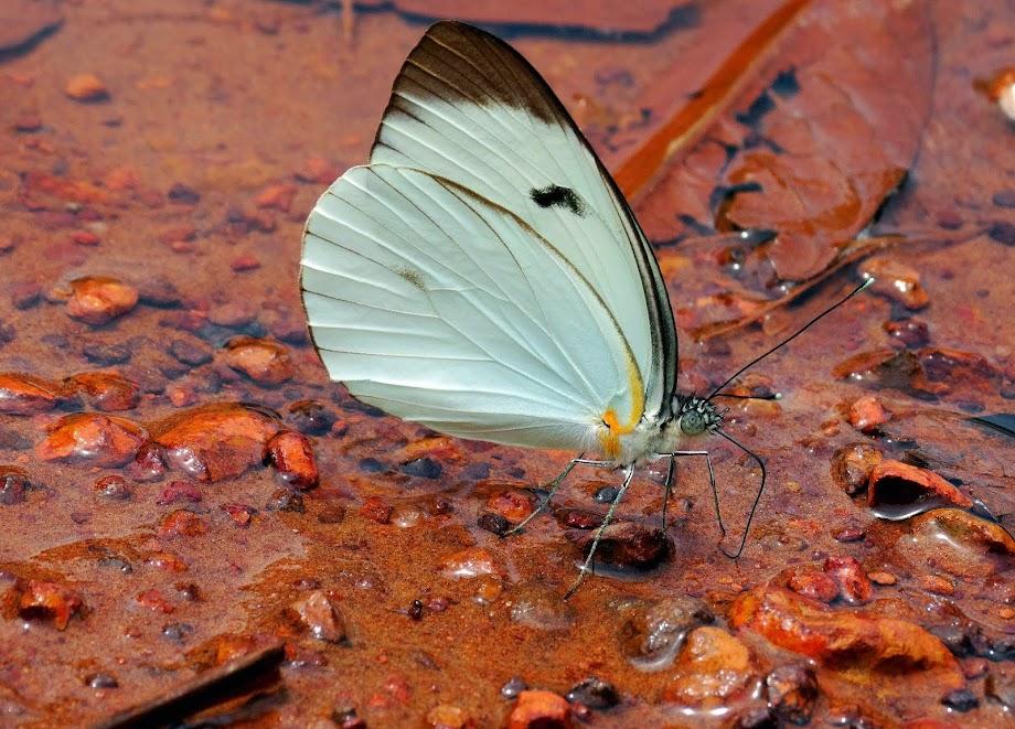 Lago do Iranduba, Mun. Iranduba, Amazonas.