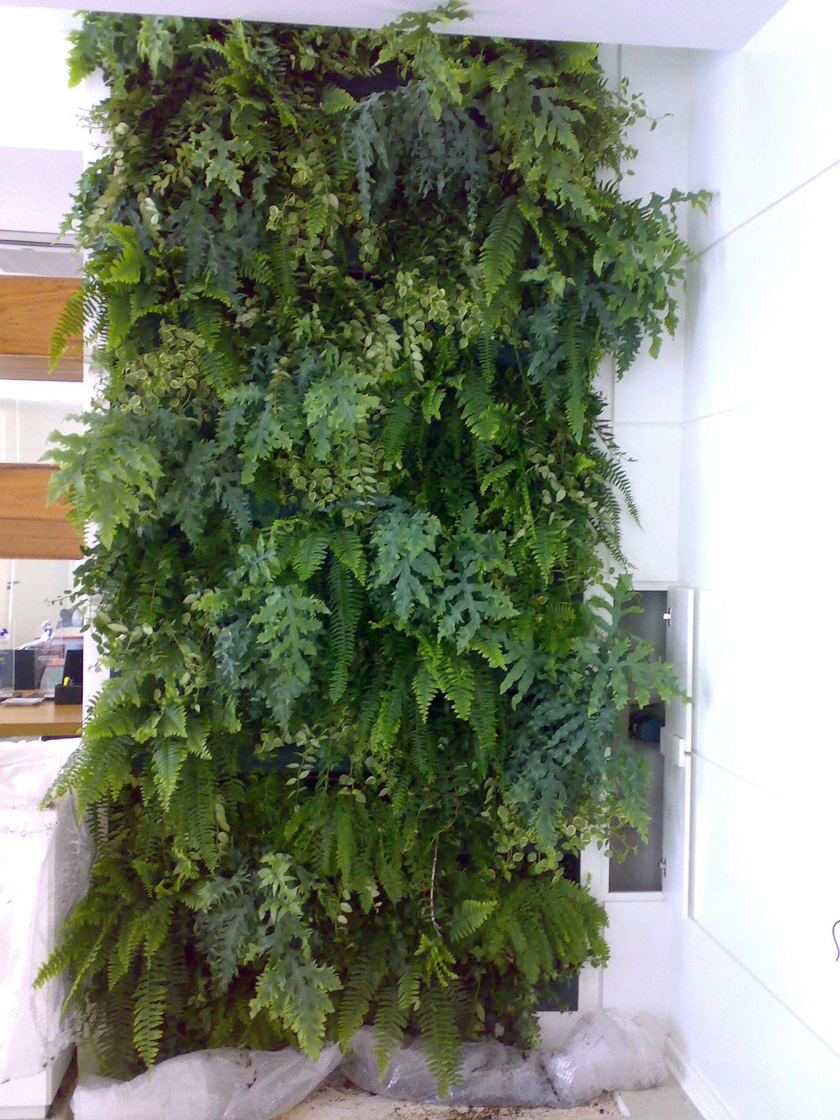 Jardinagem parede verde Plantas para paredes verdes