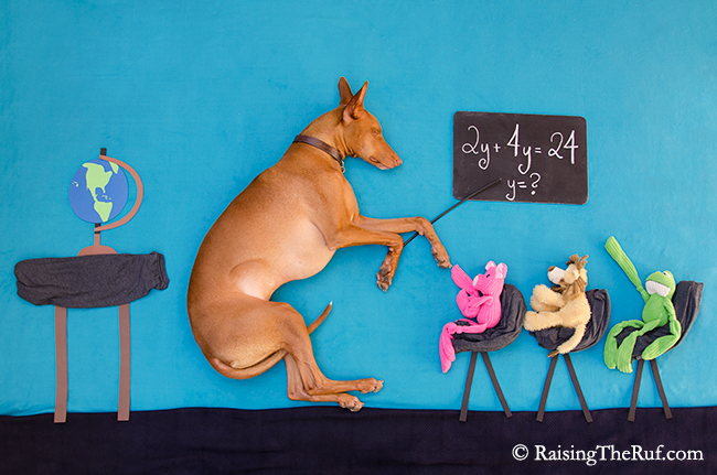 dog school math problem