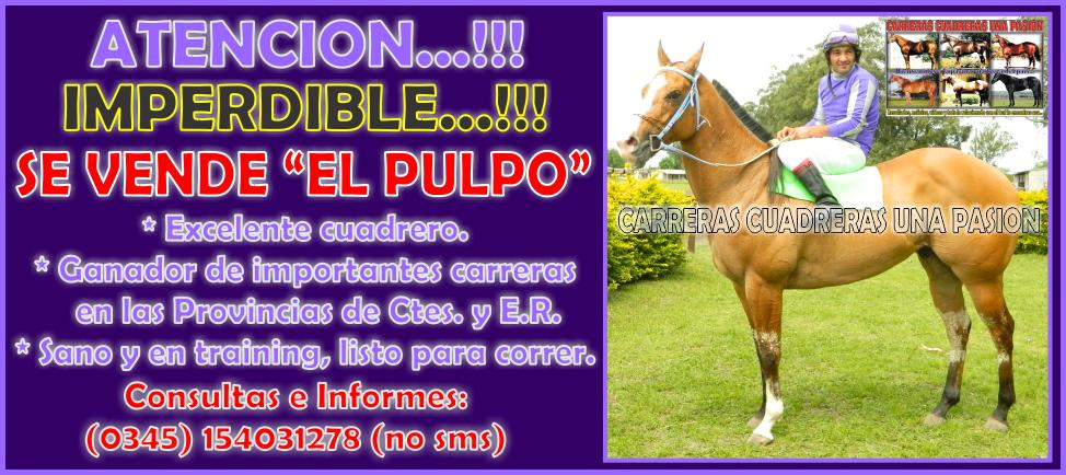 EL PULPO - VENTA - 30.10.2014