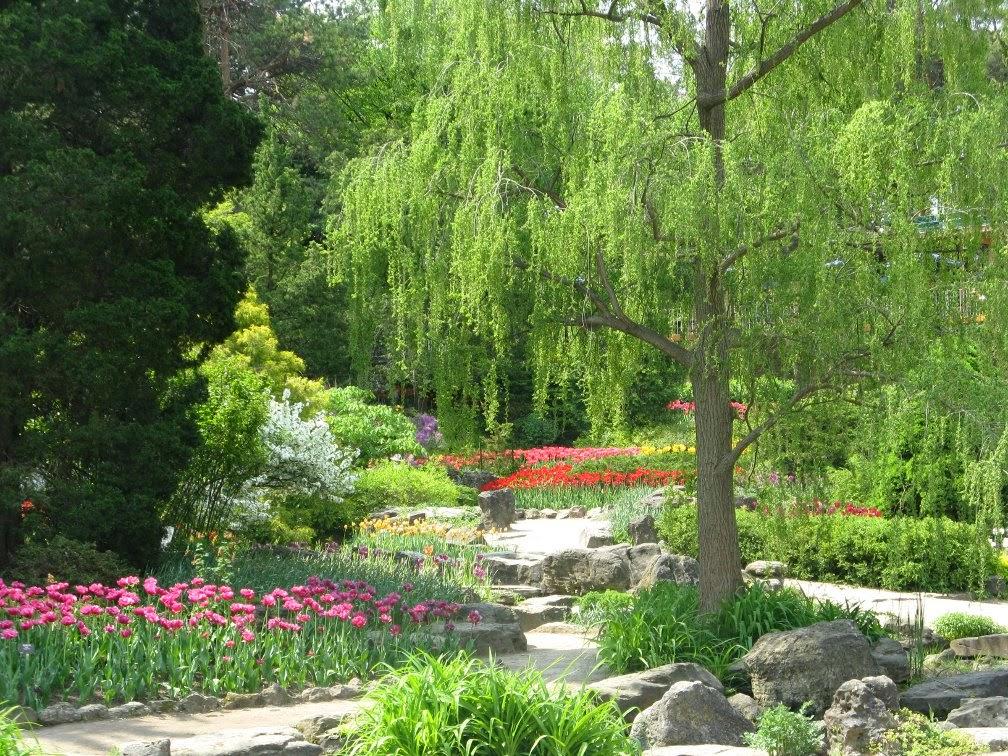 Royal Botanical Gardens tulips Rock garden by garden muses-not another Toronto gardening blog