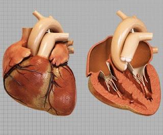 زراعة القلب تزيد خطر الإصابة بسرطان الجلد