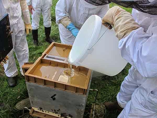 Union syndicale des apiculteurs picards 7e cours 2014 du rucher cole - Comment tailler les geraniums pour l hiver ...