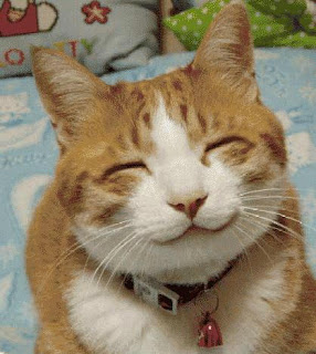 Smiling cat photo
