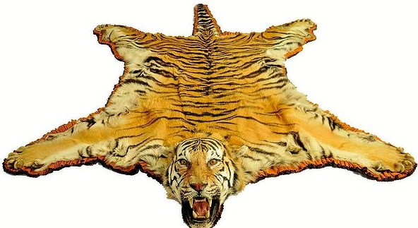 Australian Big Cats More Animal Skins Released For Sale