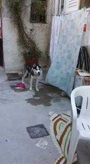 Βρέθηκε θηλυκό σκυλάκι στη Νίκαια. Το αναγνωρίζει κανείς?