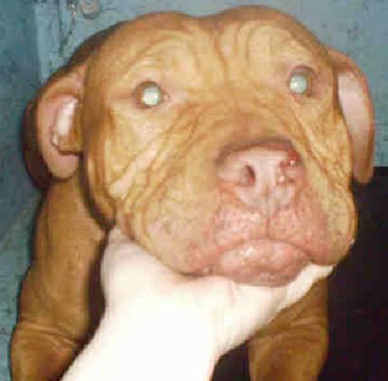 Saint Karma S Dog Rescue