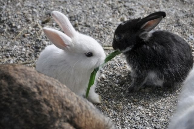 Funny animals of the week - 14 February 2014 (40 pics), two bunnies eat grass