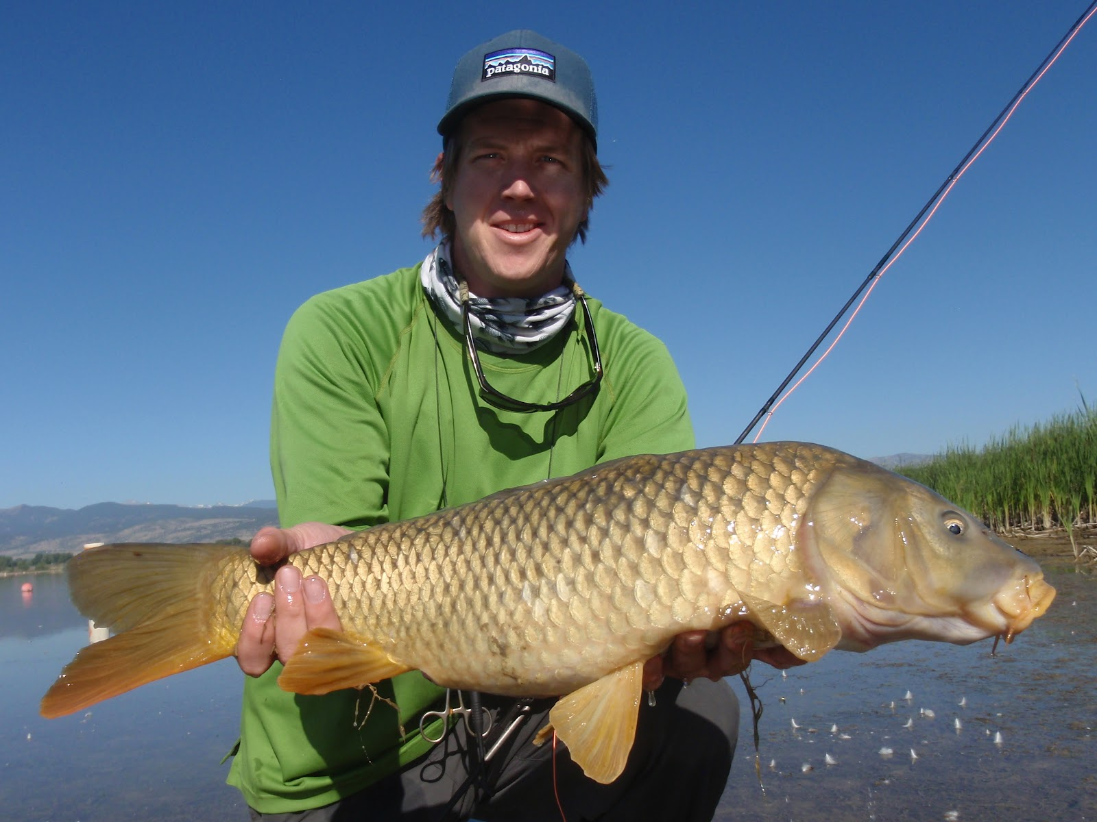 Colorado fly fishing reports bona fide the carp fishing for Fly fishing carp