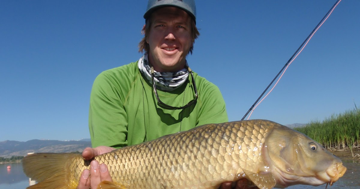 Colorado fly fishing reports bona fide the carp fishing for Yampa river fishing report