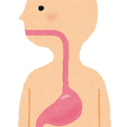 食道・胃・腸のイラスト(人体)