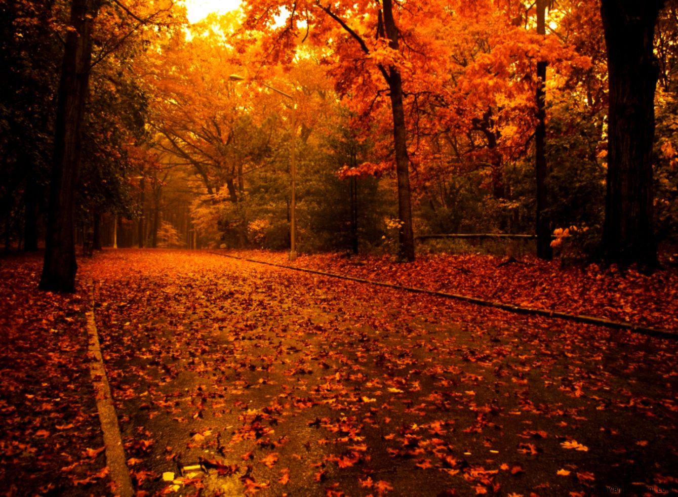 Fall Trees widescreen wallpaper