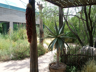 chile ristra and yucca cactus