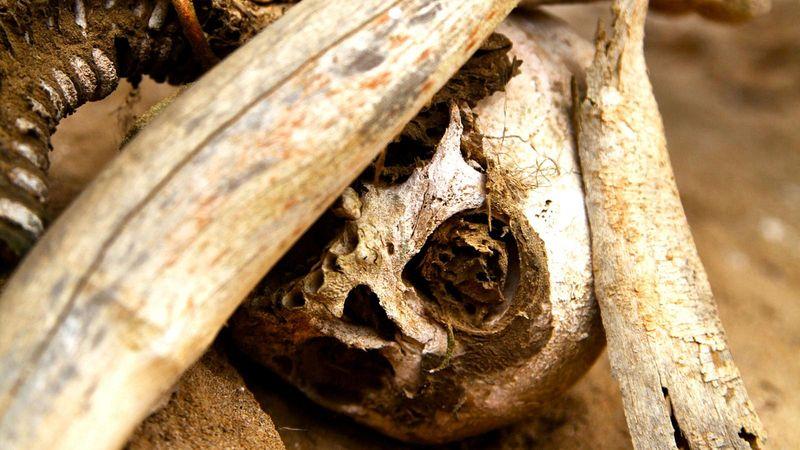 aseki-mummies-5