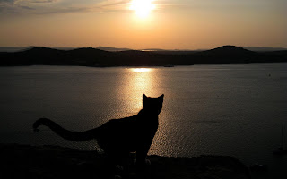 Cat in Evening Sunset HD Wallpapers