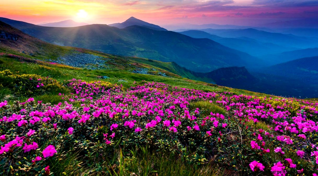 Good Wallpaper Mountain Flower - mountain-flower-live-wallpaper-android-apps-on-google-play  Graphic_93861.jpg