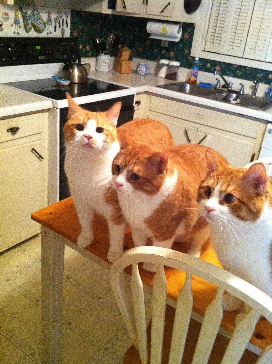 funny cat pictures, three cats