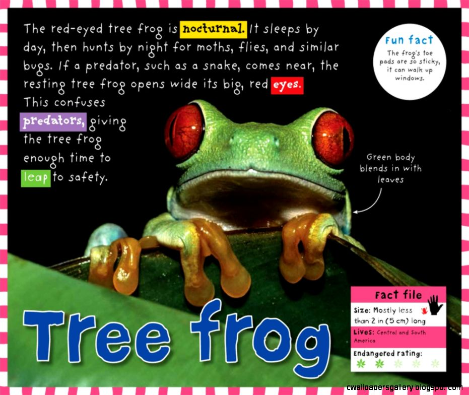 Smart Kids Rainforest  Roger Priddy  Macmillan