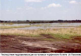 Осушение болот полесья