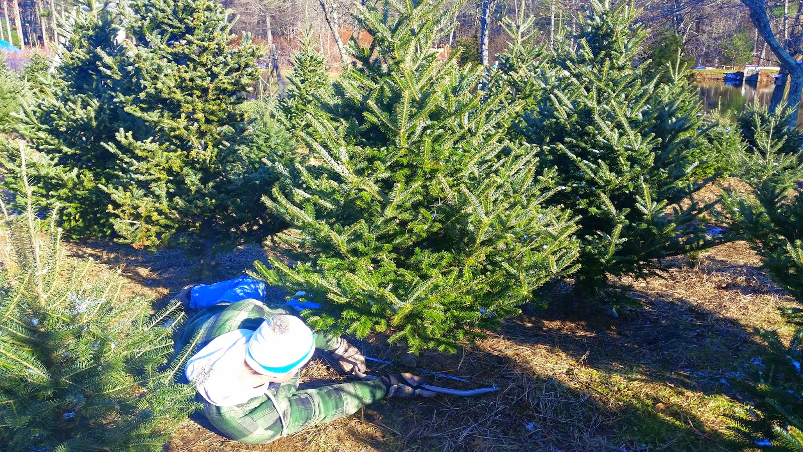 The-Christmas-Tree-Farm-Travel-the-East