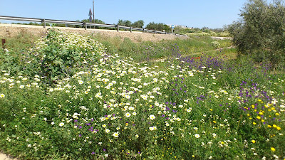 Flores en el campo