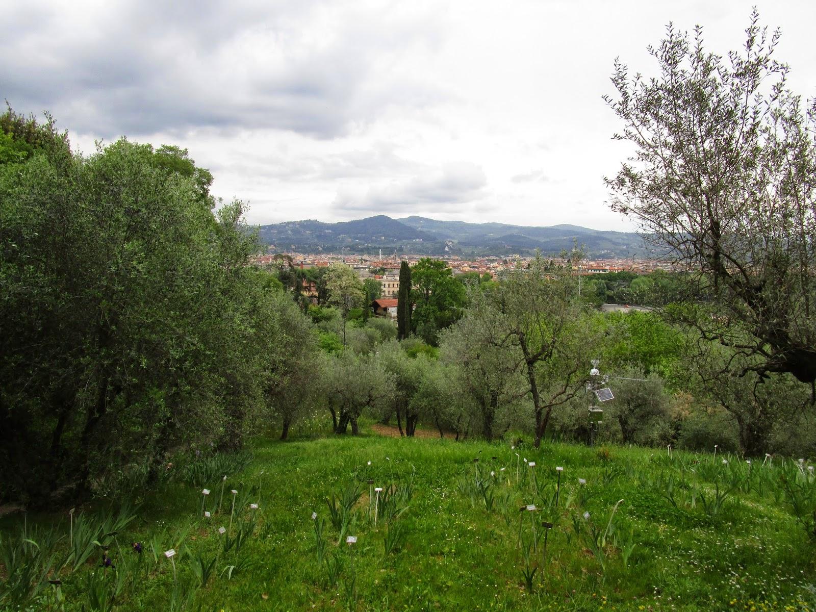 Il blog di kylie firenze e il giardino degli iris - Il giardino degli esperidi ...