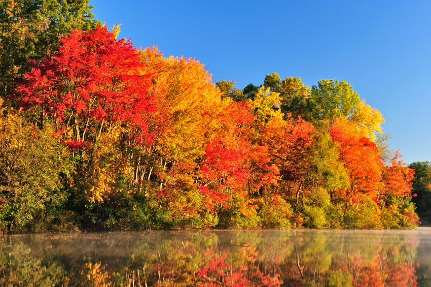 http://www.bernerhofinn.com/blog/5-top-ways-to-enjoy-fall-foliage/