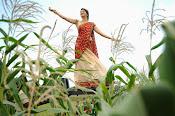 Tanvi vyas Latest Photos in Half Saree-thumbnail-15