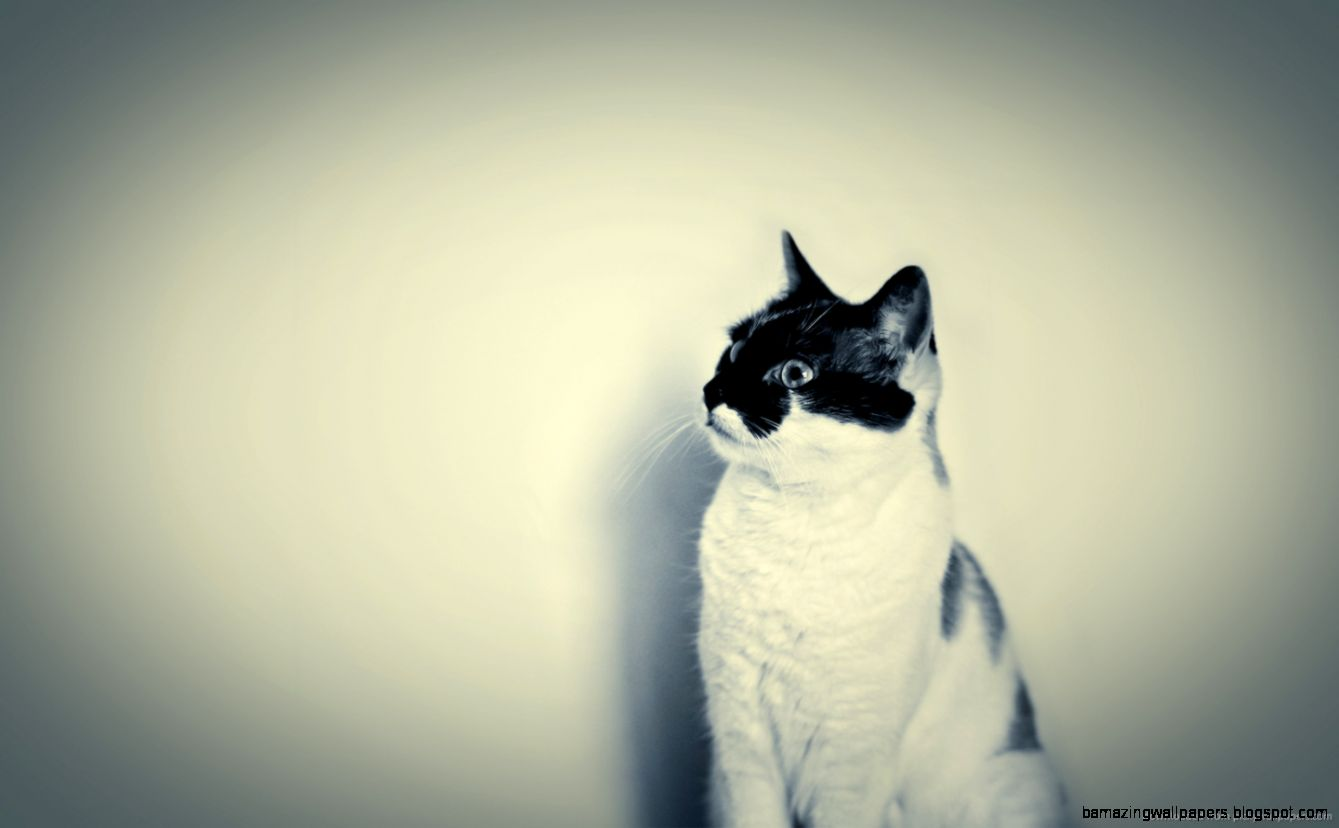 hipster cat tumblr backgrounds amazing wallpapers