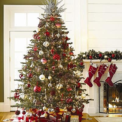 Decorated Christmas Trees Picture Gallary