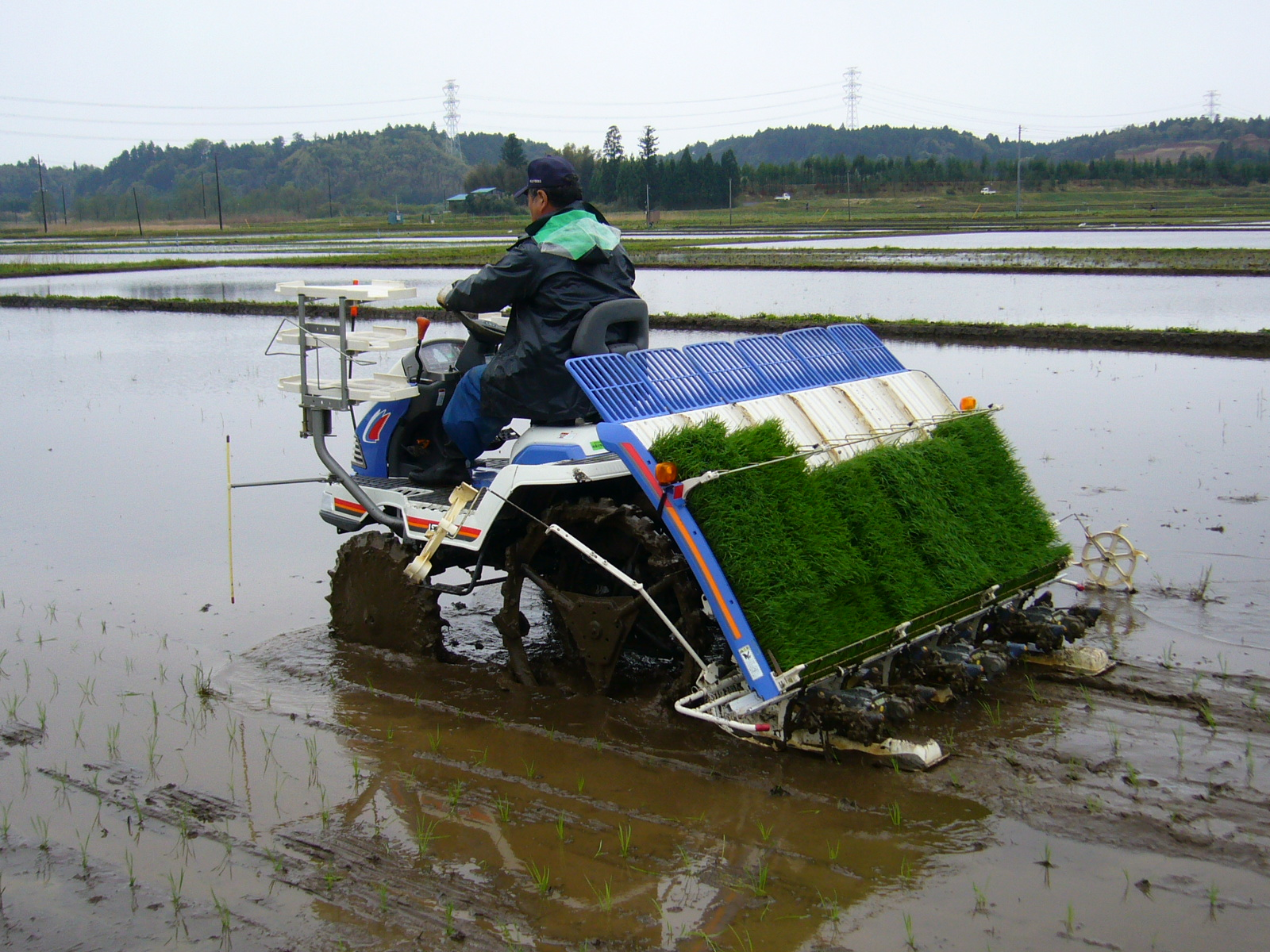 Rice seed for planting - Planting Machine