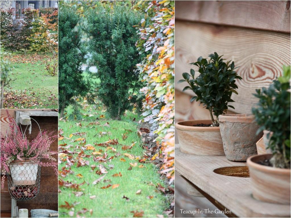 teacup in the garden der garten im herbst. Black Bedroom Furniture Sets. Home Design Ideas