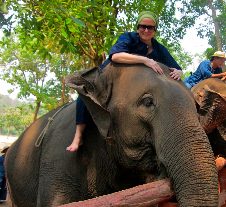 elephants meet again after a long time apart