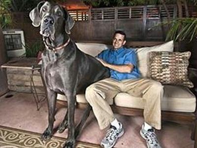 Cachorro Ig