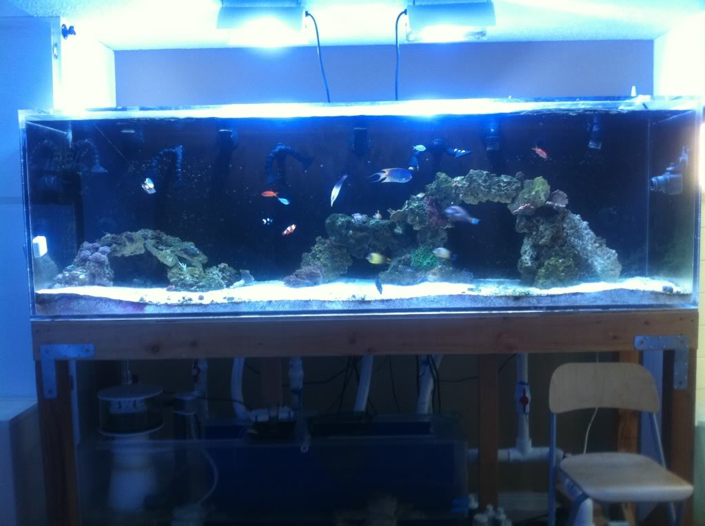 Giant Aquariums 300 Gallon Aquarium Reef Tank 1 Inch