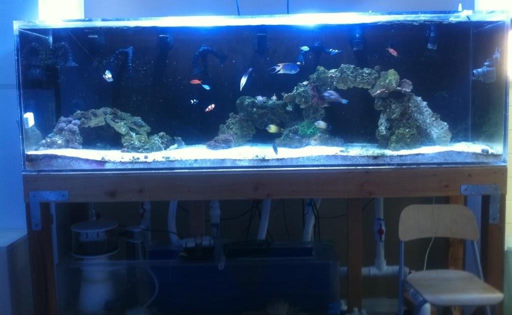Giant aquariums 300 gallon aquarium reef tank 1 inch for Craigslist fish tank
