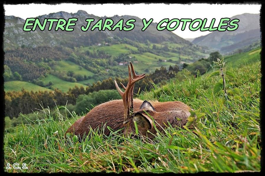 ENTRE JARAS Y COTOLLES