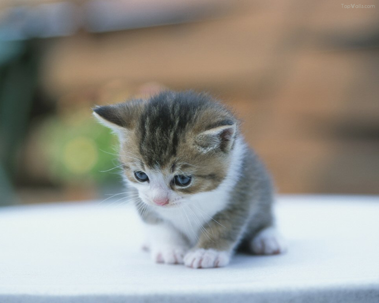 Cute Cat Photo (Foto Kucing Lucu)