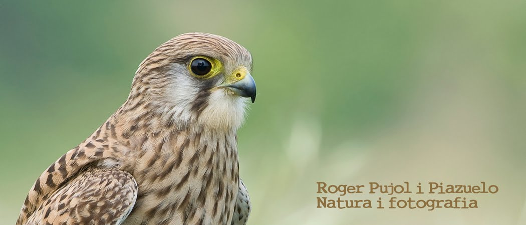 Roger Pujol i Piazuelo - Natura i fotografia